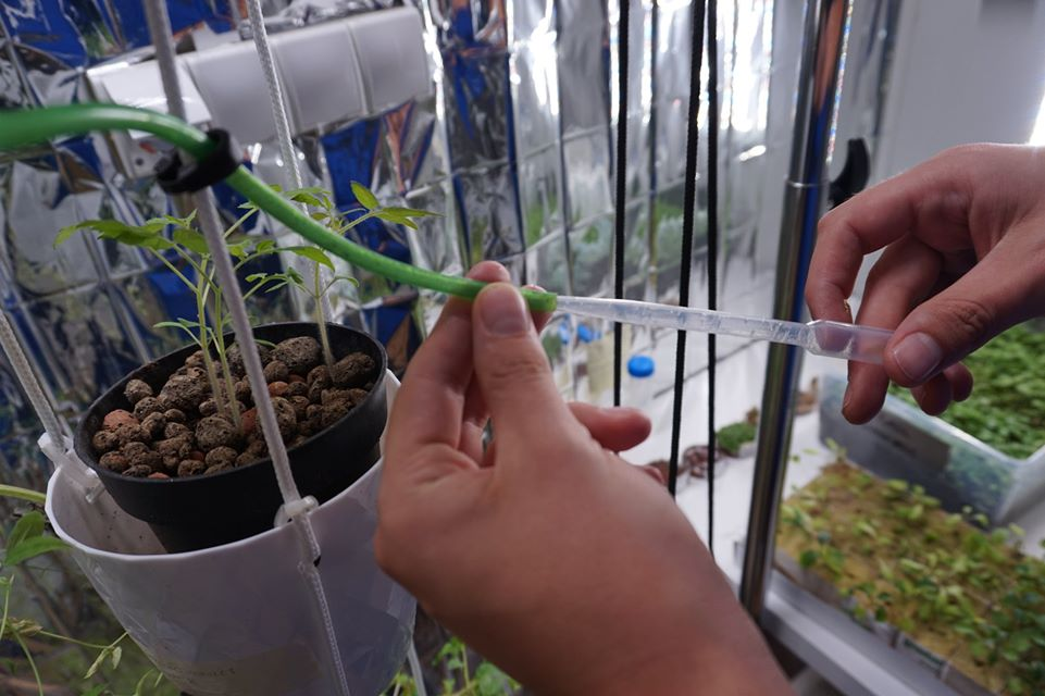 LEARN Mission, Hydroponic System Maintenance, ©LEARN Crew